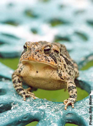 Is your negative toad a positive prince in disguise? (Photo: Billy Waller)