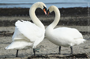 Is your 'look' saying 'ugly duckling' or 'beautiful swan'?